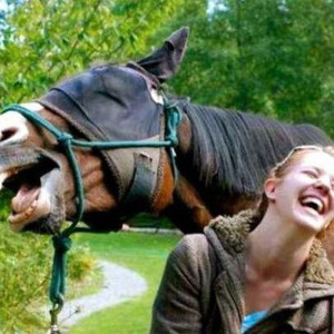horse-laughing-450x300-300x300