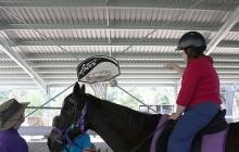 RDA Samford - Basketball Horse Activity