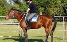 RDA North Qld - Horse Riding For Disabled