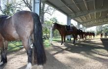 RDA Samford - Horses