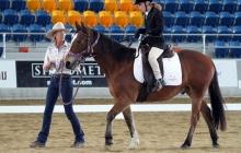 RDAQ Horse Riding