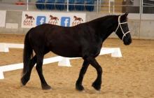 RDAQ Horse