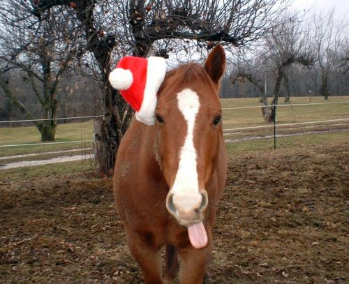 christmas-horse